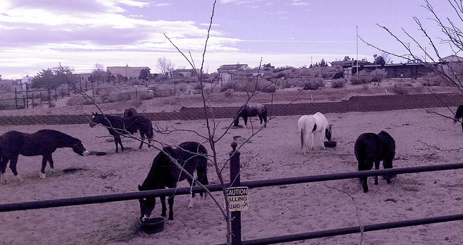 Loving Thunder Horses